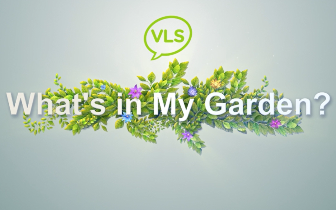Learn Vietnamese Online: What's in My Garden   Parts of a tree